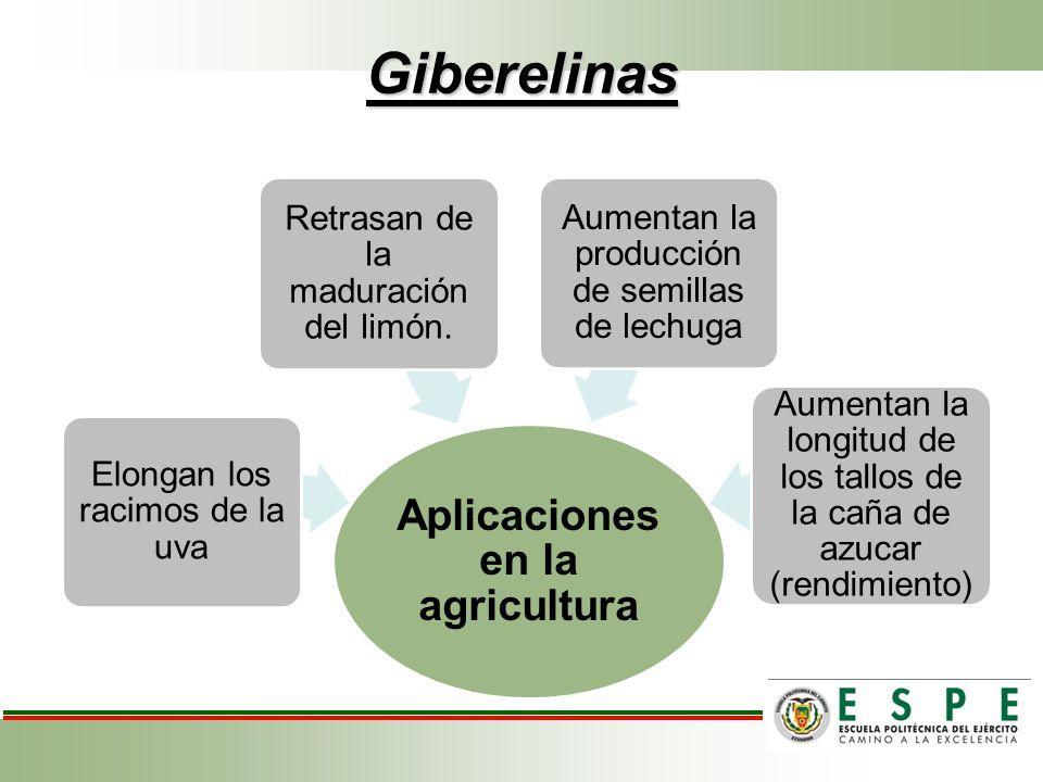 Giberelinas Aplicaciones en la agricultura Elongan los racimos de la uva Retrasan de la maduración del limón. Aumentan la producción de semillas de le