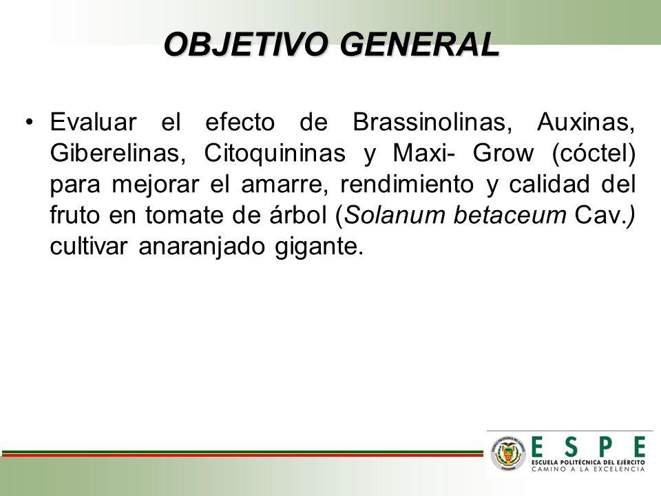 OBJETIVO GENERAL Evaluar el efecto de Brassinolinas, Auxinas, Giberelinas, Citoquininas y Maxi- Grow (cóctel) para mejorar el amarre, rendimiento y ca
