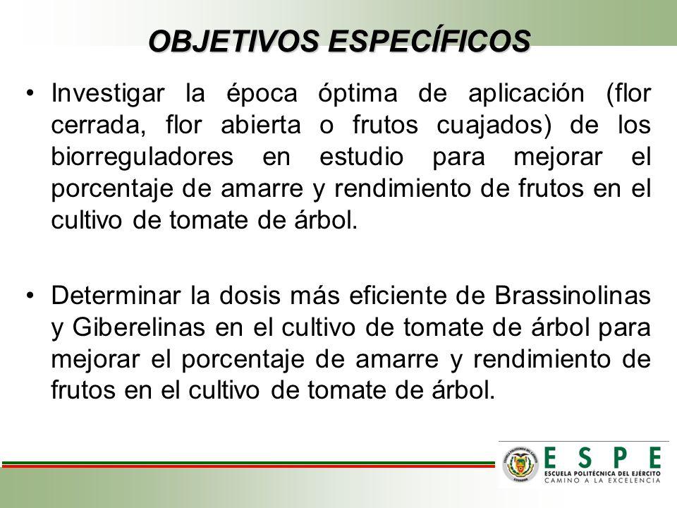 OBJETIVOS ESPECÍFICOS Investigar la época óptima de aplicación (flor cerrada, flor abierta o frutos cuajados) de los biorreguladores en estudio para m