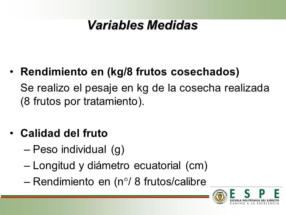 Variables Medidas Rendimiento en (kg/8 frutos cosechados) Se realizo el pesaje en kg de la cosecha realizada (8 frutos por tratamiento). Calidad del f