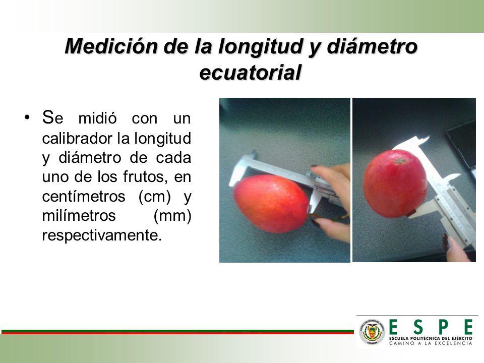 Medición de la longitud y diámetro ecuatorial S e midió con un calibrador la longitud y diámetro de cada uno de los frutos, en centímetros (cm) y milí