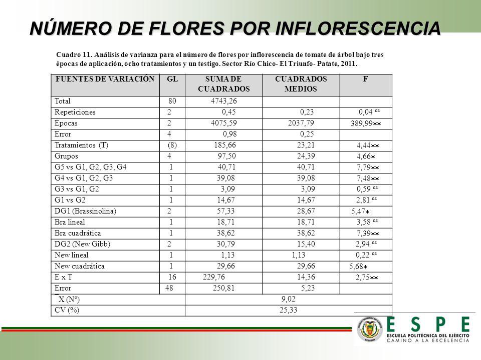 NÚMERO DE FLORES POR INFLORESCENCIA FUENTES DE VARIACIÓNGLSUMA DE CUADRADOS CUADRADOS MEDIOS F Total804743,26 Repeticiones 2 0,45 0,23 0,04 ns Épocas