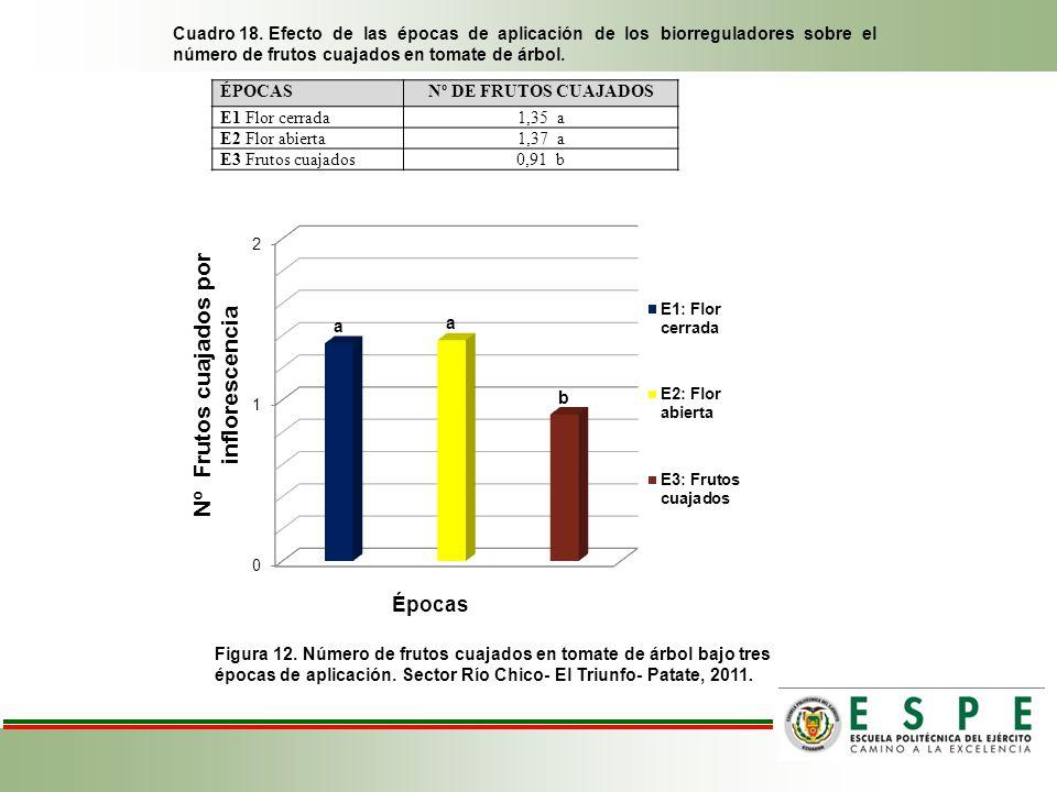 Cuadro 18. Efecto de las épocas de aplicación de los biorreguladores sobre el número de frutos cuajados en tomate de árbol. Figura 12. Número de fruto