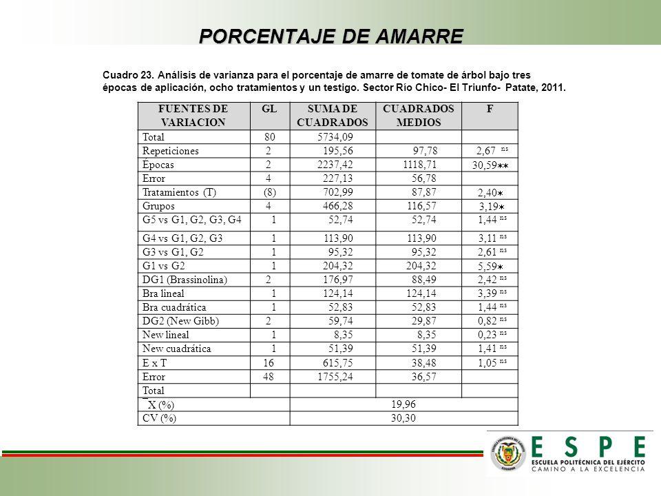 PORCENTAJE DE AMARRE Cuadro 23. Análisis de varianza para el porcentaje de amarre de tomate de árbol bajo tres épocas de aplicación, ocho tratamientos