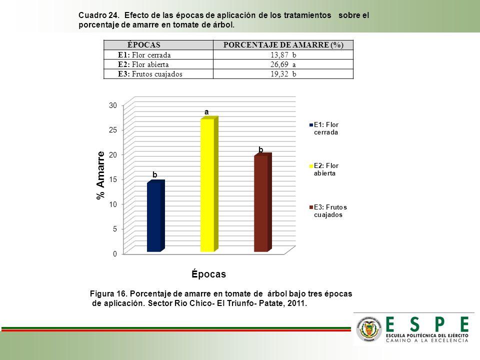 Cuadro 24. Efecto de las épocas de aplicación de los tratamientos sobre el porcentaje de amarre en tomate de árbol. Figura 16. Porcentaje de amarre en