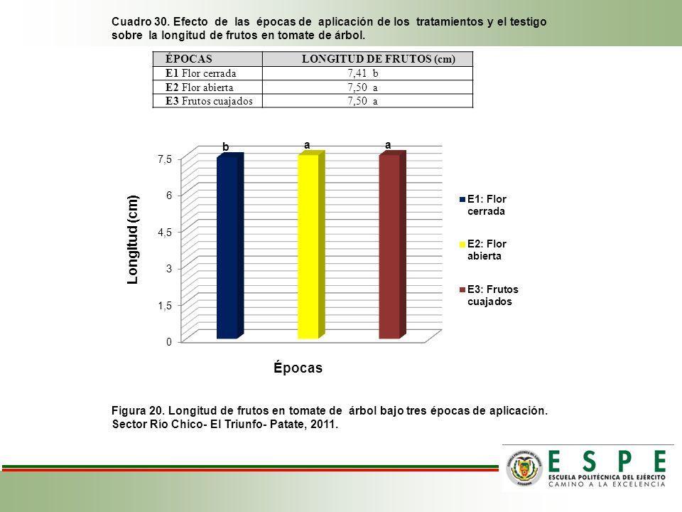 Cuadro 30. Efecto de las épocas de aplicación de los tratamientos y el testigo sobre la longitud de frutos en tomate de árbol. Figura 20. Longitud de