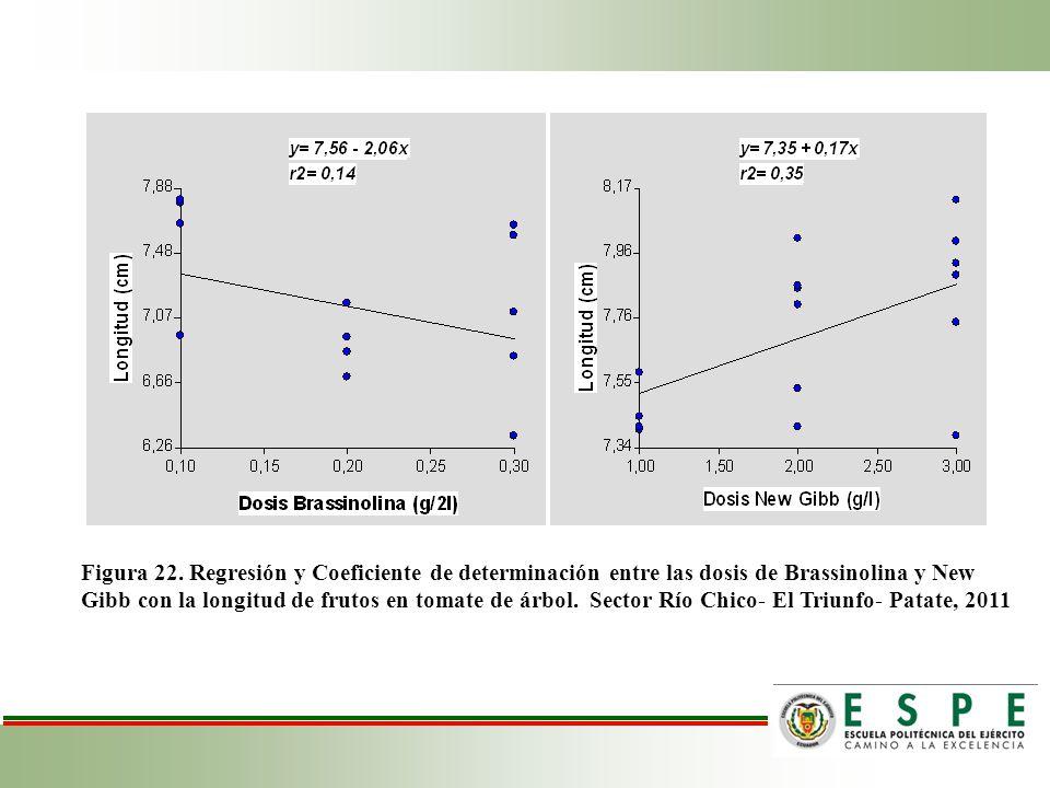 Figura 22. Regresión y Coeficiente de determinación entre las dosis de Brassinolina y New Gibb con la longitud de frutos en tomate de árbol. Sector Rí
