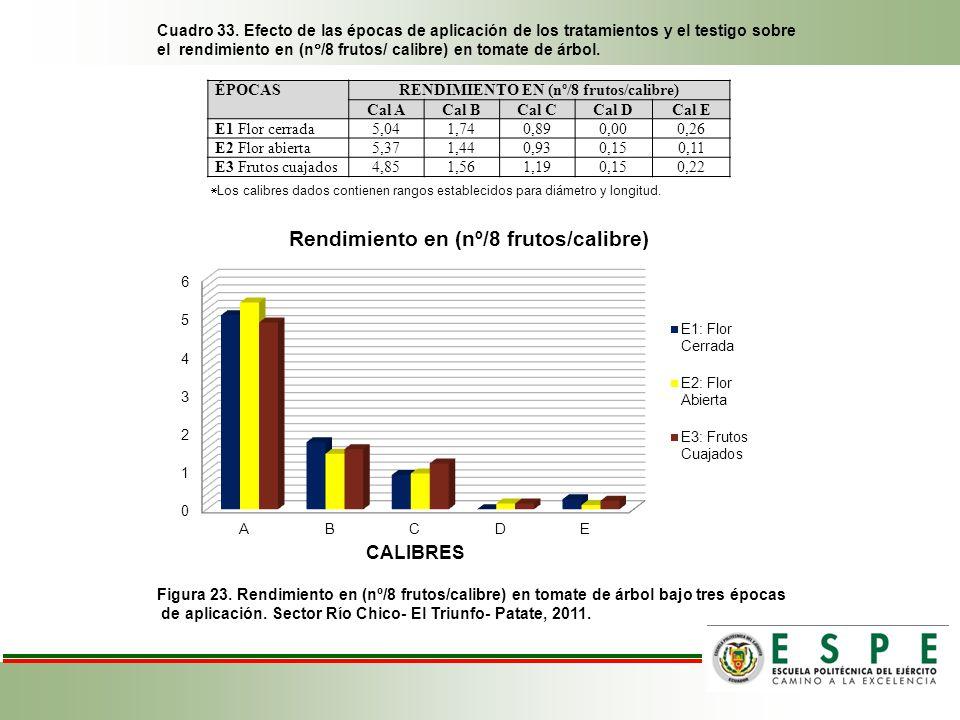 Cuadro 33. Efecto de las épocas de aplicación de los tratamientos y el testigo sobre el rendimiento en (n /8 frutos/ calibre) en tomate de árbol. Figu