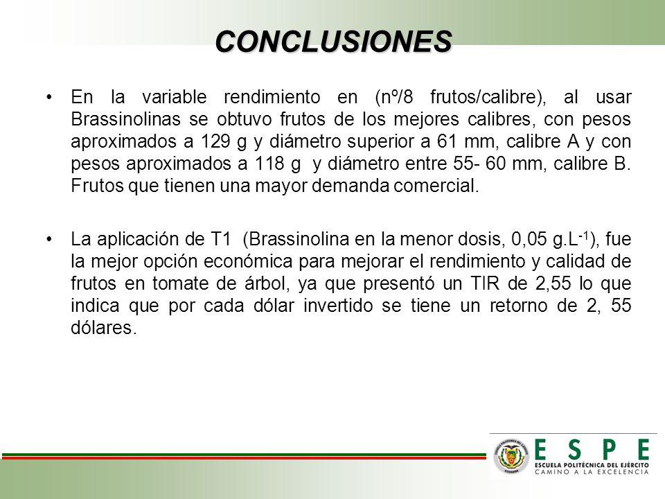 CONCLUSIONES En la variable rendimiento en (nº/8 frutos/calibre), al usar Brassinolinas se obtuvo frutos de los mejores calibres, con pesos aproximado