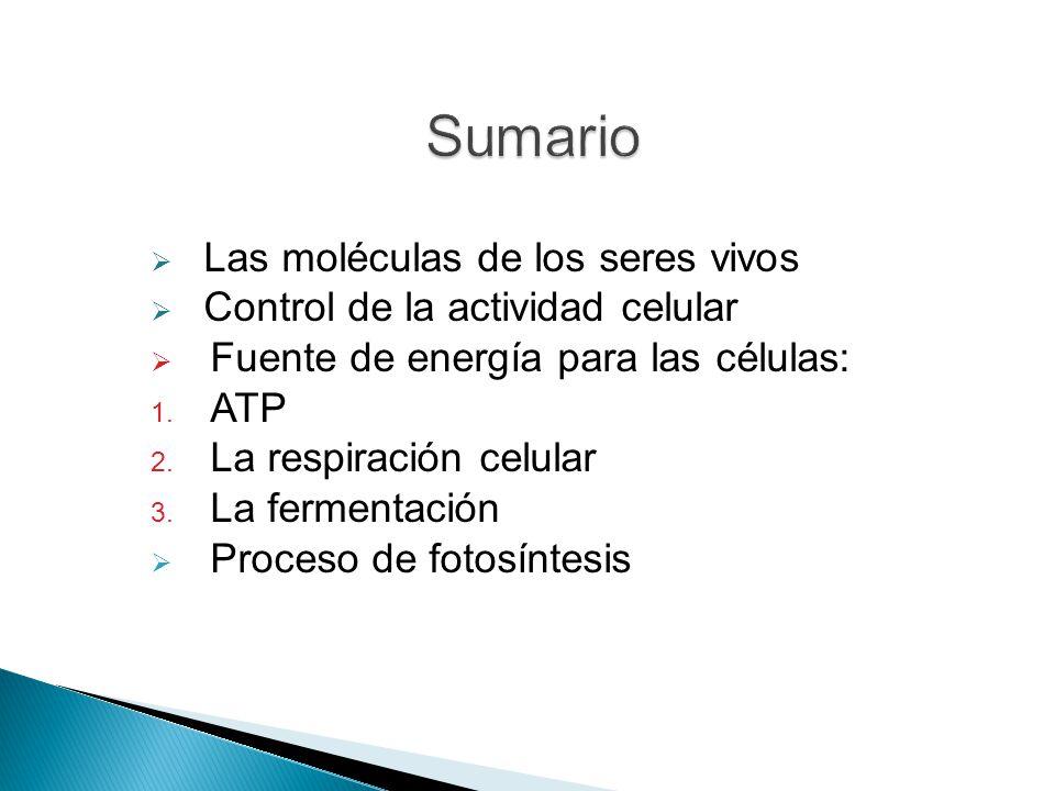 Las moléculas de los seres vivos Control de la actividad celular Fuente de energía para las células: 1.