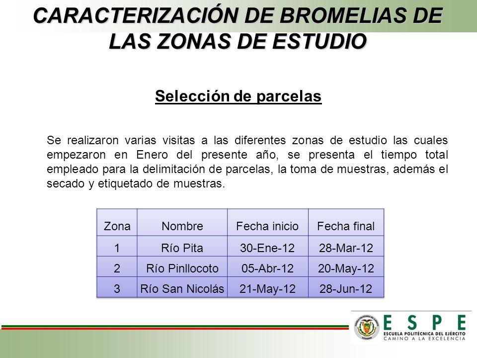 CARACTERIZACIÓN DE BROMELIAS DE LAS ZONAS DE ESTUDIO Selección de parcelas Se realizaron varias visitas a las diferentes zonas de estudio las cuales e