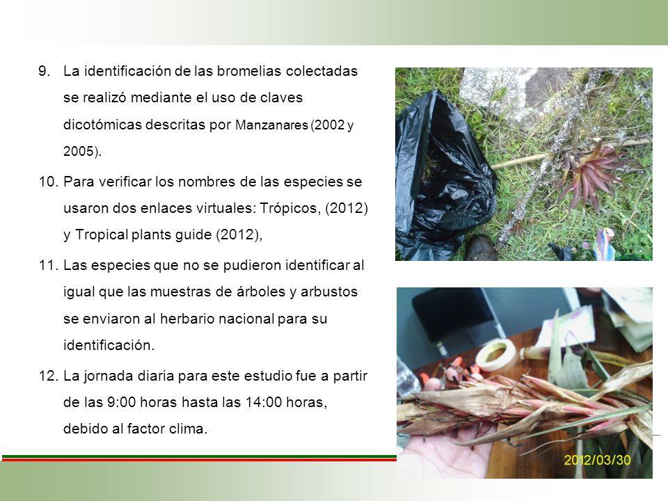 9.La identificación de las bromelias colectadas se realizó mediante el uso de claves dicotómicas descritas por Manzanares (2002 y 2005). 10.Para verif