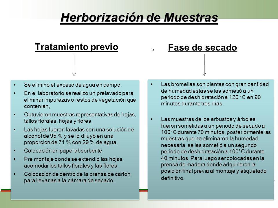 Herborización de Muestras Tratamiento previo Se eliminó el exceso de agua en campo. En el laboratorio se realizó un prelavado para eliminar impurezas