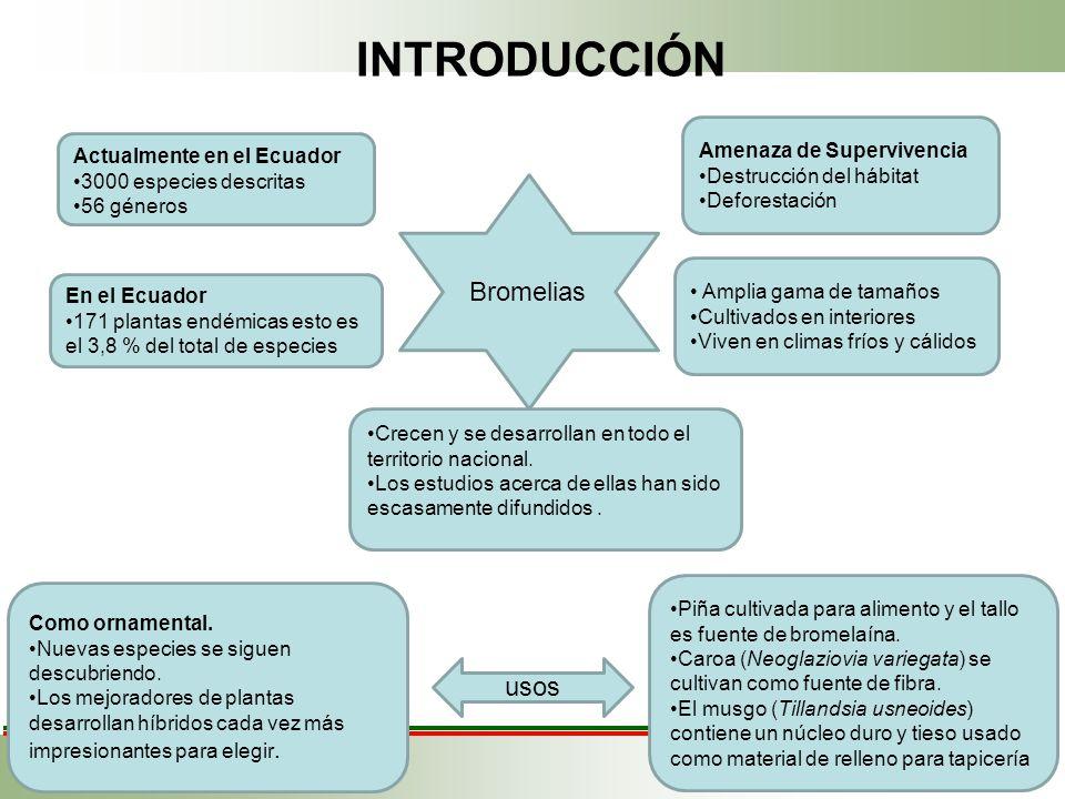 INTRODUCCIÓN Amenaza de Supervivencia Destrucción del hábitat Deforestación Bromelias En el Ecuador 171 plantas endémicas esto es el 3,8 % del total d