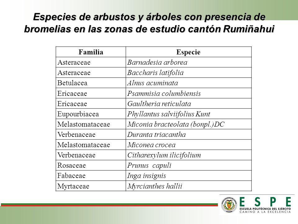 Especies de arbustos y árboles con presencia de bromelias en las zonas de estudio cantón Rumiñahui FamiliaEspecie AsteraceaeBarnadesia arborea Asterac