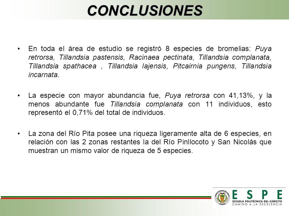 CONCLUSIONES En toda el área de estudio se registró 8 especies de bromelias: Puya retrorsa, Tillandsia pastensis, Racinaea pectinata, Tillandsia compl