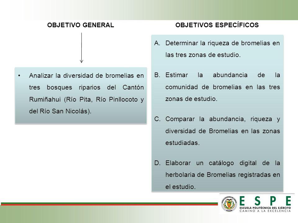 OBJETIVO GENERAL Analizar la diversidad de bromelias en tres bosques riparios del Cantón Rumiñahui (Río Pita, Río Pinllocoto y del Río San Nicolás). O