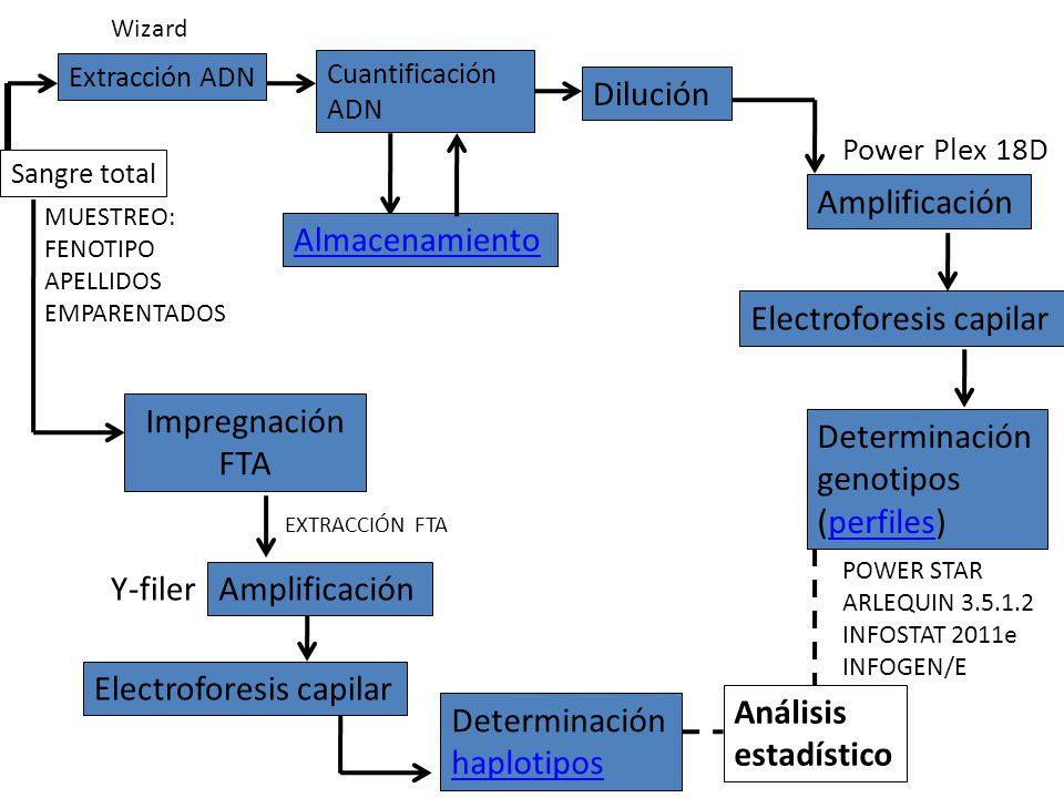 Sangre total Amplificación Electroforesis capilar Determinación genotipos (perfiles)perfiles Análisis estadístico Impregnación FTA Power Plex 18D Ampl