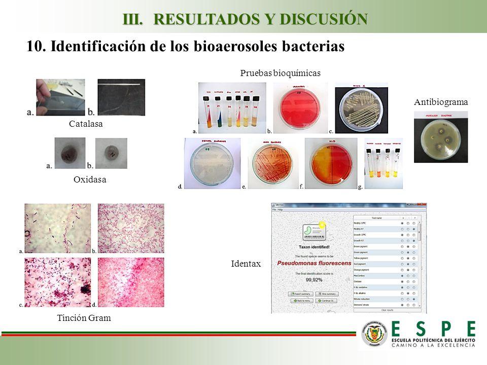 10. Identificación de los bioaerosoles bacterias Catalasa Oxidasa Tinción Gram Pruebas bioquímicas Antibiograma III. RESULTADOS Y DISCUSIÓN Identax