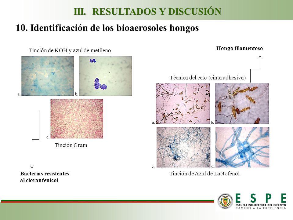 10. Identificación de los bioaerosoles hongos Tinción de KOH y azul de metileno Tinción Gram Tinción de Azul de Lactofenol Técnica del celo (cinta adh