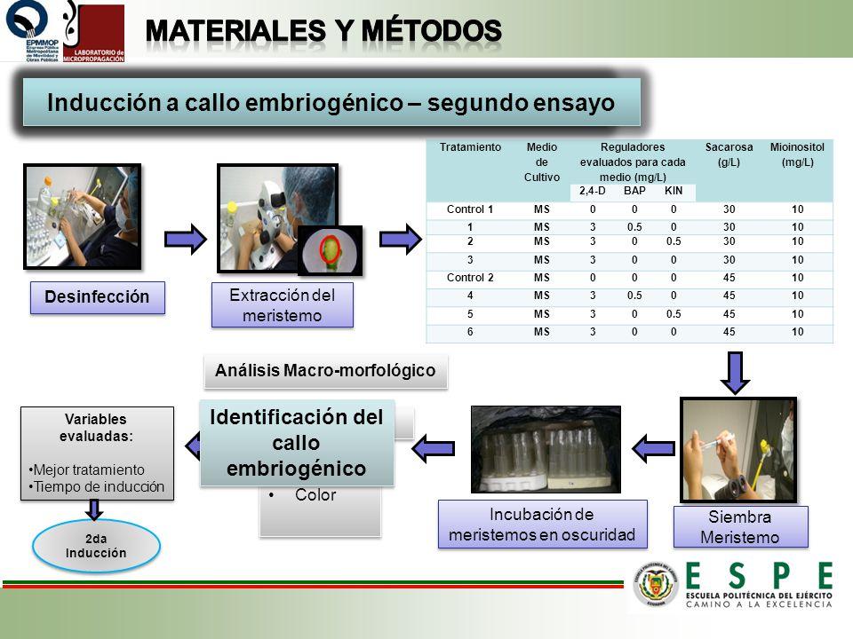 Desinfección Siembra Meristemo Extracción del meristemo Incubación de meristemos en oscuridad Tratamiento Medio de Cultivo Reguladores evaluados para