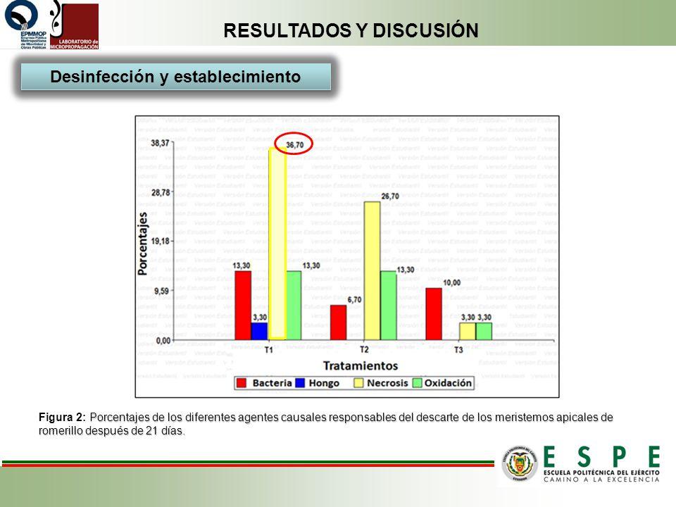 RESULTADOS Y DISCUSIÓN Porcentajes de los diferentes agentes causales responsables del descarte de los meristemos apicales de romerillo después de 21