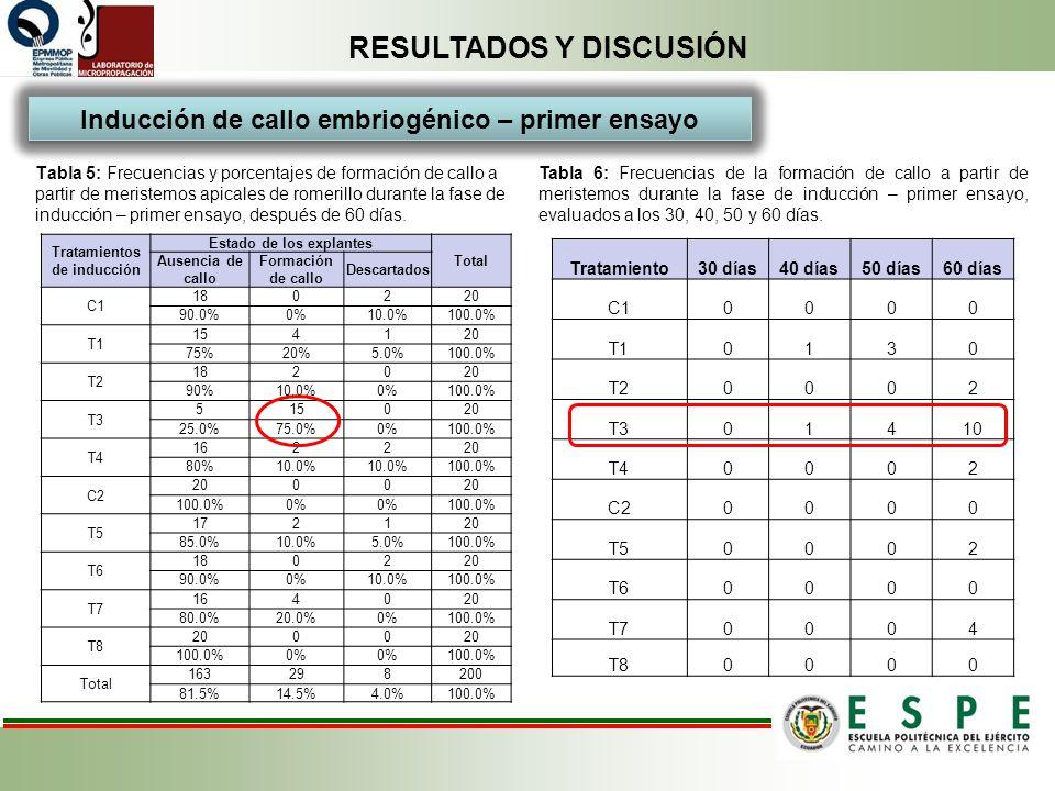RESULTADOS Y DISCUSIÓN Inducción de callo embriogénico – primer ensayo Tabla 5: Frecuencias y porcentajes de formación de callo a partir de meristemos