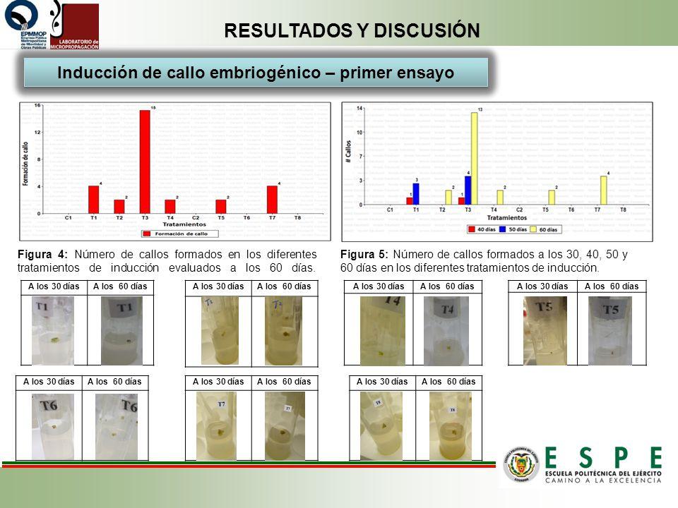RESULTADOS Y DISCUSIÓN Figura 4: Número de callos formados en los diferentes tratamientos de inducción evaluados a los 60 días. Inducción de callo emb