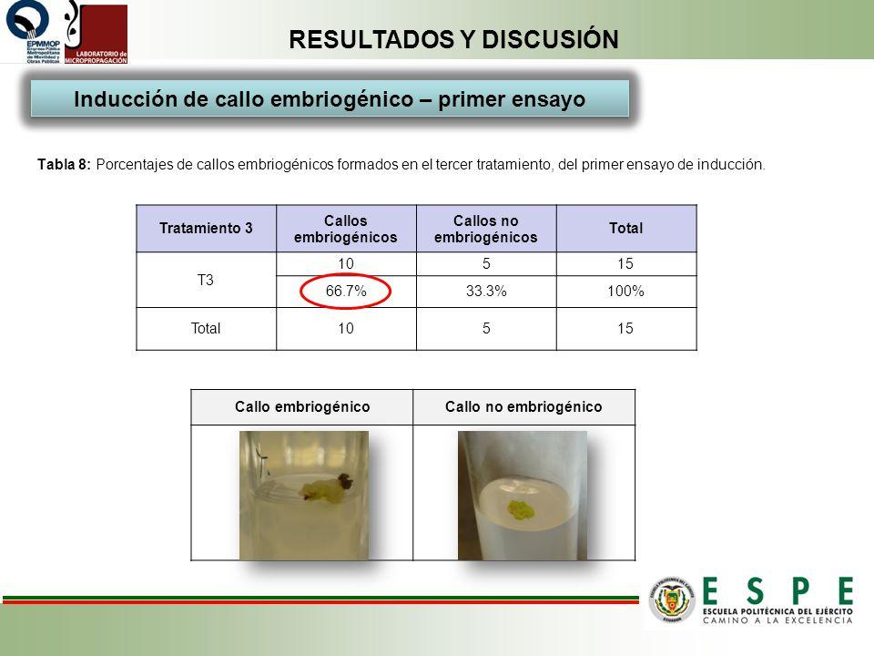 RESULTADOS Y DISCUSIÓN Tabla 8: Porcentajes de callos embriogénicos formados en el tercer tratamiento, del primer ensayo de inducción. Tratamiento 3 C