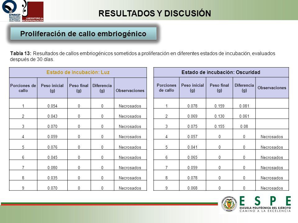 RESULTADOS Y DISCUSIÓN Tabla 13: Resultados de callos embriogénicos sometidos a proliferación en diferentes estados de incubación, evaluados después d