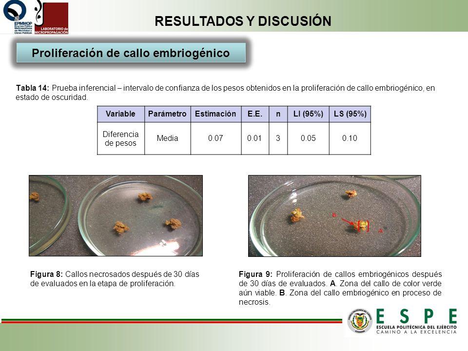 RESULTADOS Y DISCUSIÓN Tabla 14: Prueba inferencial – intervalo de confianza de los pesos obtenidos en la proliferación de callo embriogénico, en esta