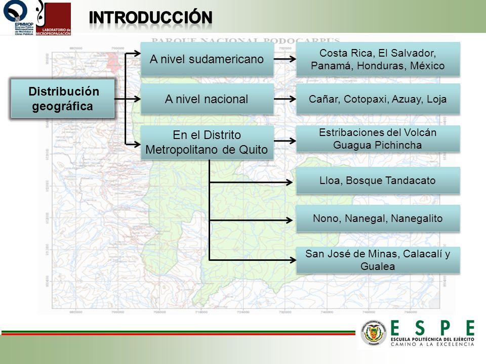 A nivel sudamericano Costa Rica, El Salvador, Panamá, Honduras, México Distribución geográfica A nivel nacional En el Distrito Metropolitano de Quito