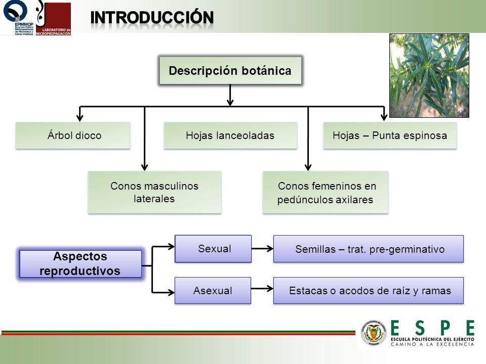 Aspectos Reproductivos Semillas – trat. pre-germinativo Sexual Asexual Estacas o acodos de raíz y ramas Descripción botánica Hojas lanceoladas Hojas –