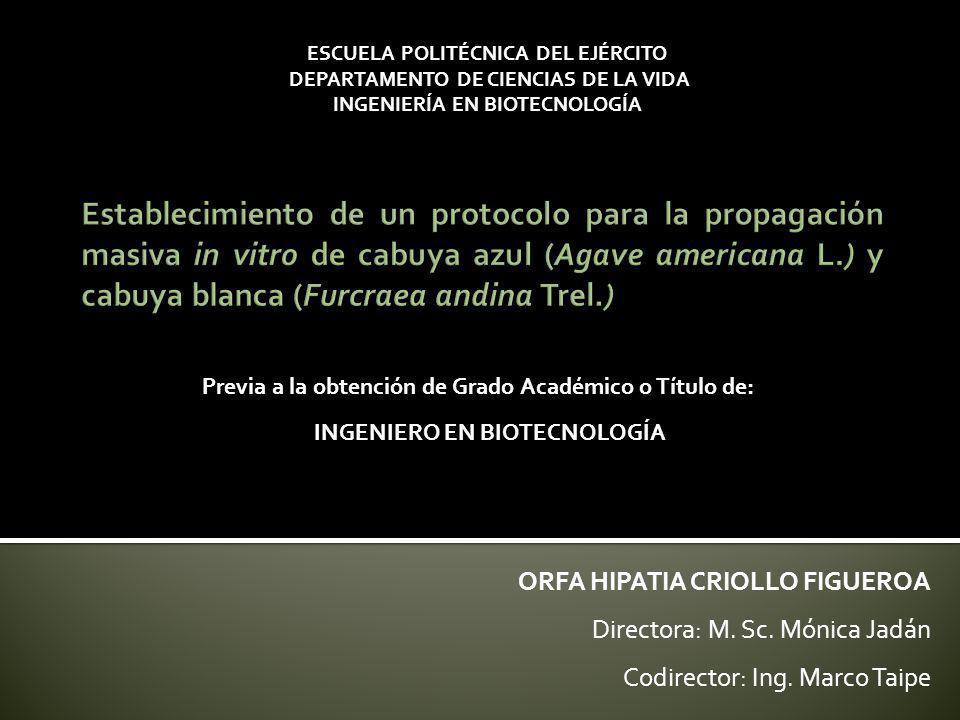 Familia Agavaceae Fibras duras Economía verde Cabuya blanca (Furcraea andina Trel.) Cabuya azul (Agave americana L.) Ecuador La exportación de cabuya en el Ecuador fue de USD 144 mil y 17,39 toneladas en el 2008 (CORPEI, 2009).