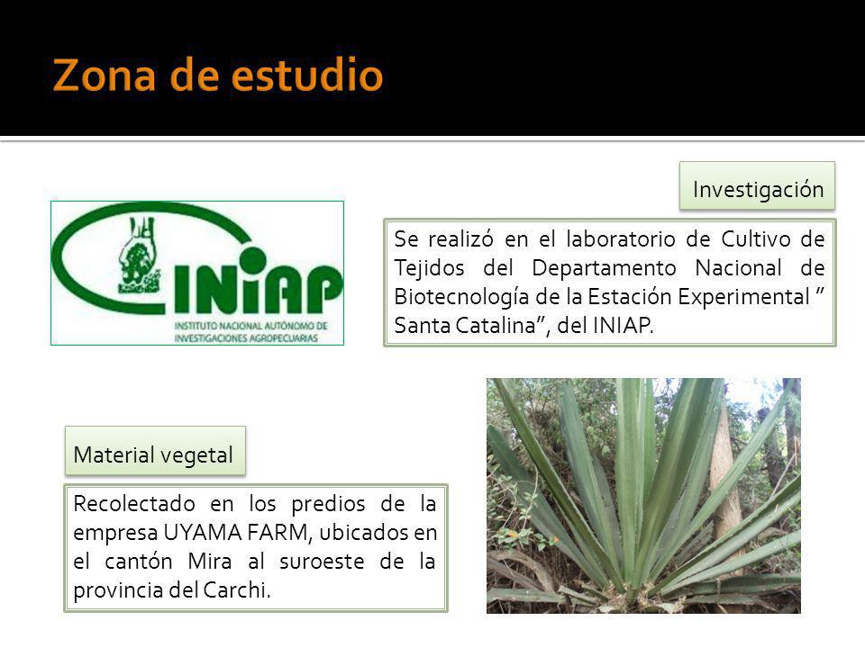 Se realizó en el laboratorio de Cultivo de Tejidos del Departamento Nacional de Biotecnología de la Estación Experimental Santa Catalina, del INIAP. R