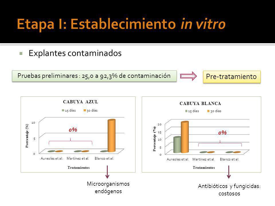 Explantes contaminados Pruebas preliminares : 25,0 a 92,3% de contaminación Pre-tratamiento 0% Microorganismos endógenos 0% Antibióticos y fungicidas: