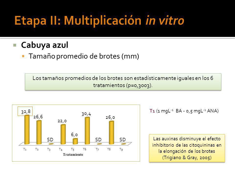 Cabuya azul Tamaño promedio de brotes (mm) T1 (1 mgL -1 BA - 0,5 mgL -1 ANA) Los tamaños promedios de los brotes son estadísticamente iguales en los 6