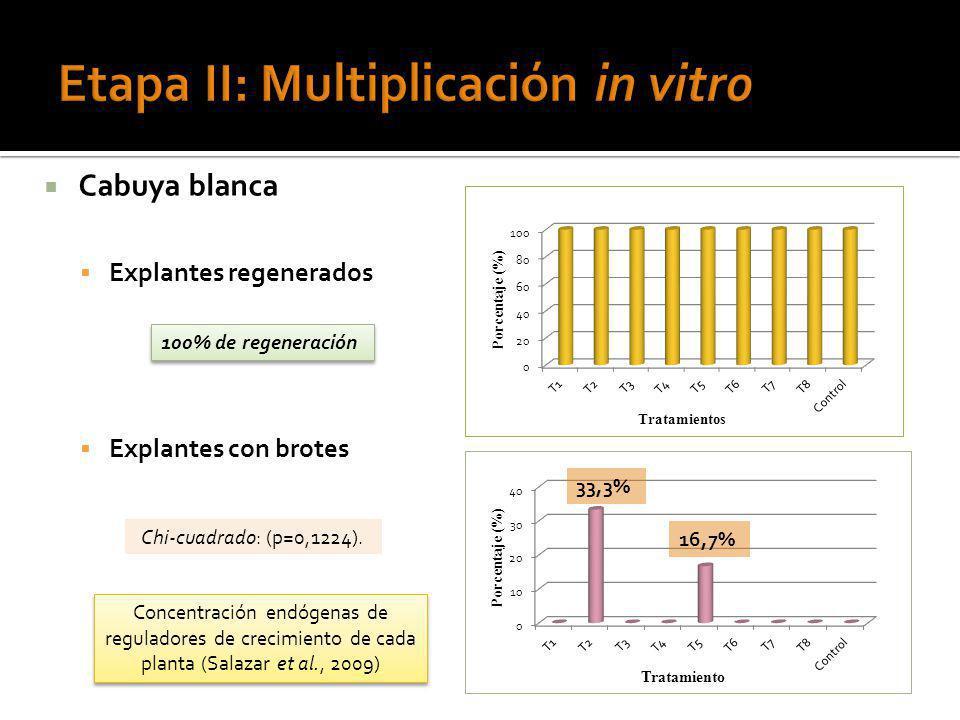 Cabuya blanca Explantes regenerados Explantes con brotes 100% de regeneración 33,3% 16,7% Concentración endógenas de reguladores de crecimiento de cad