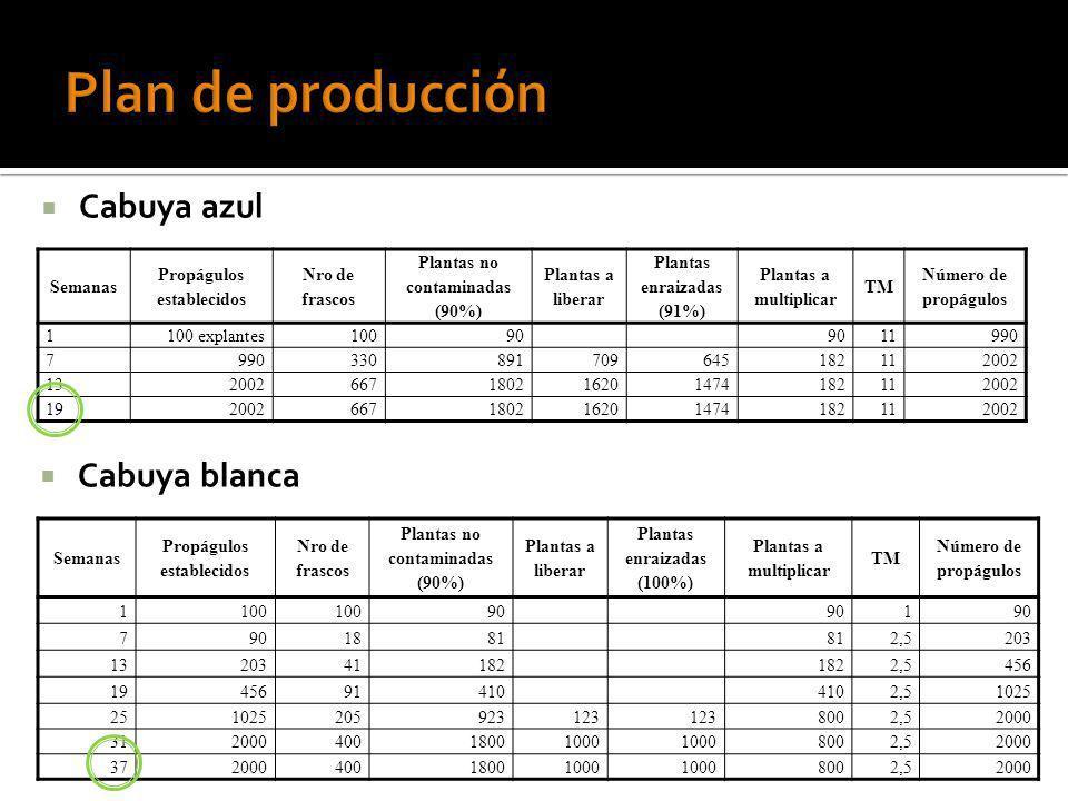 Cabuya azul Semanas Propágulos establecidos Nro de frascos Plantas no contaminadas (90%) Plantas a liberar Plantas enraizadas (91%) Plantas a multipli