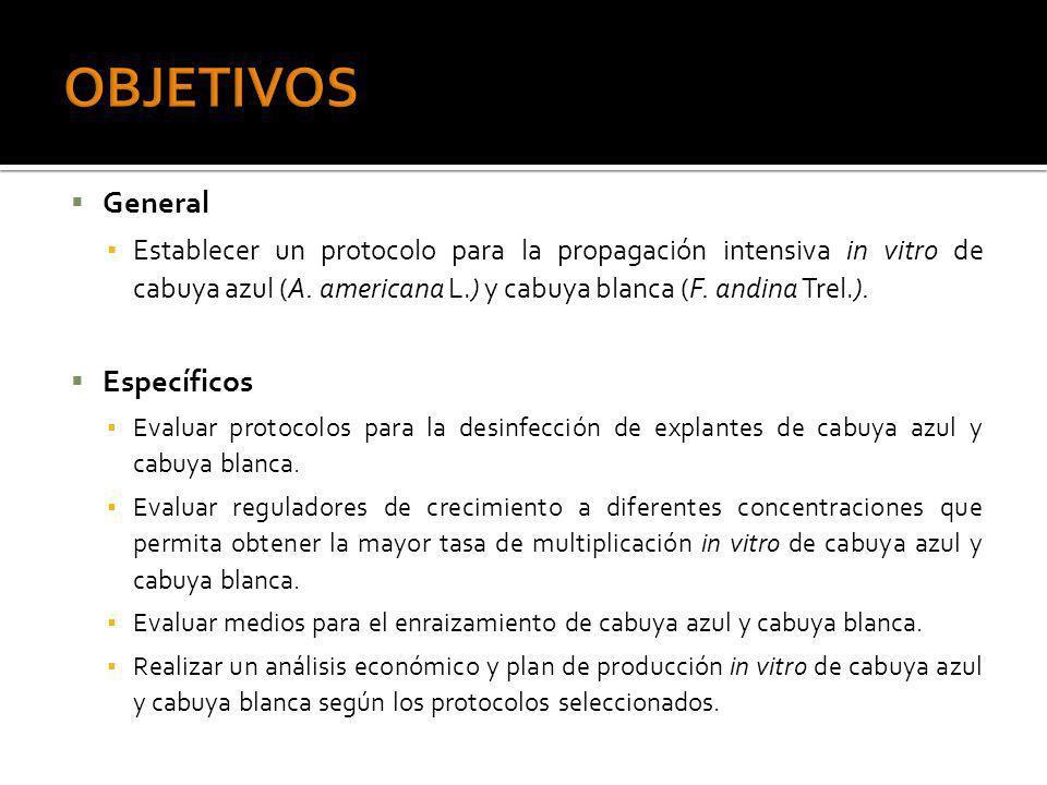 General Establecer un protocolo para la propagación intensiva in vitro de cabuya azul (A. americana L.) y cabuya blanca (F. andina Trel.). Específicos