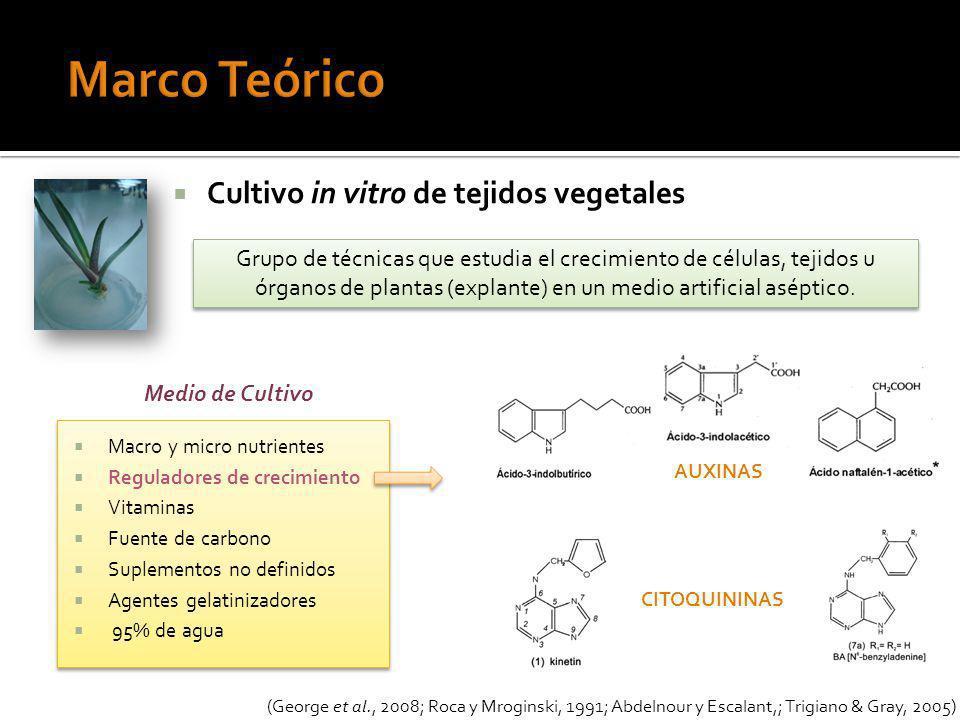 Cabuya blanca Explantes regenerados Explantes con brotes 100% de regeneración 33,3% 16,7% Concentración endógenas de reguladores de crecimiento de cada planta (Salazar et al., 2009) Chi-cuadrado: (p=0,1224).