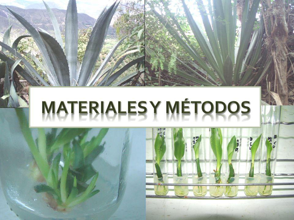 Factores a definir para un plan de producción in vitro Costeo por procesos.