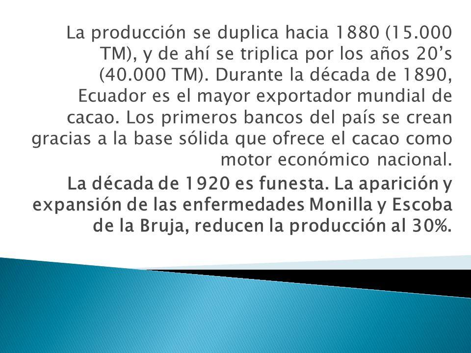 La producción se duplica hacia 1880 (15.000 TM), y de ahí se triplica por los años 20s (40.000 TM). Durante la década de 1890, Ecuador es el mayor exp