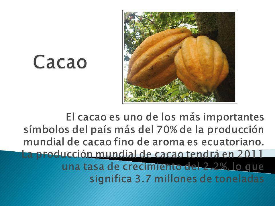 El cacao es uno de los más importantes símbolos del país más del 70% de la producción mundial de cacao fino de aroma es ecuatoriano. La producción mun
