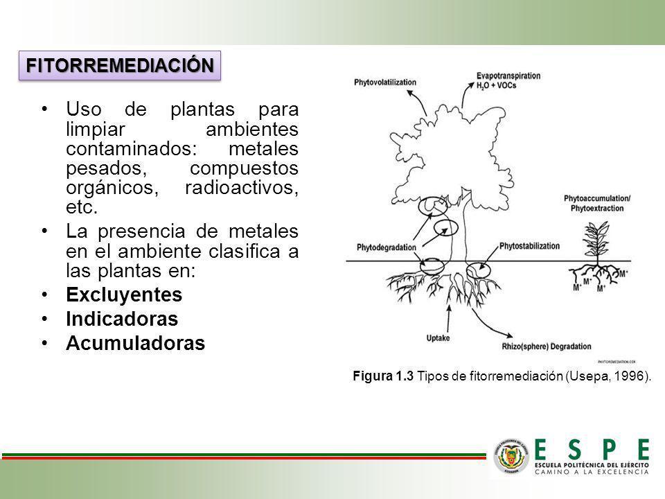 Uso de plantas para limpiar ambientes contaminados: metales pesados, compuestos orgánicos, radioactivos, etc. La presencia de metales en el ambiente c