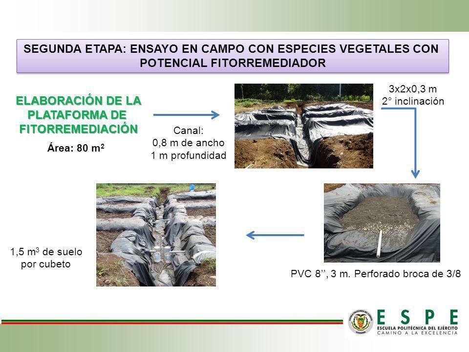 SEGUNDA ETAPA: ENSAYO EN CAMPO CON ESPECIES VEGETALES CON POTENCIAL FITORREMEDIADOR SEGUNDA ETAPA: ENSAYO EN CAMPO CON ESPECIES VEGETALES CON POTENCIA
