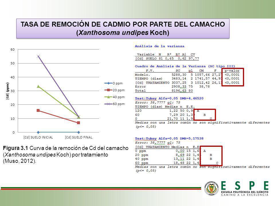 TASA DE REMOCIÓN DE CADMIO POR PARTE DEL CAMACHO (Xanthosoma undipes Koch) TASA DE REMOCIÓN DE CADMIO POR PARTE DEL CAMACHO (Xanthosoma undipes Koch)