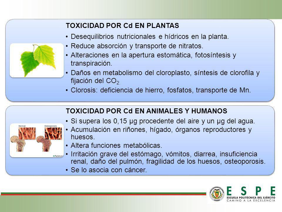 TOXICIDAD POR Cd EN PLANTAS Desequilibrios nutricionales e hídricos en la planta. Reduce absorción y transporte de nitratos. Alteraciones en la apertu