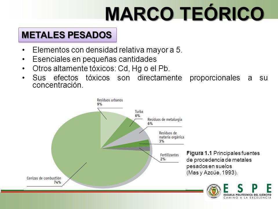 MARCO TEÓRICO METALES PESADOS Elementos con densidad relativa mayor a 5. Esenciales en pequeñas cantidades Otros altamente tóxicos: Cd, Hg o el Pb. Su