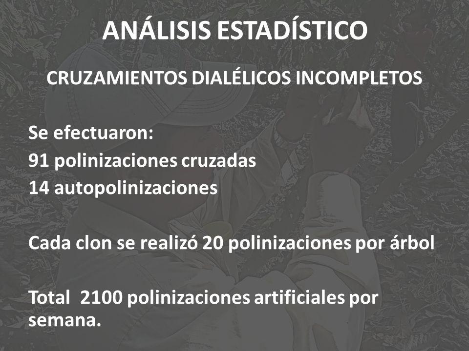 ANÁLISIS ESTADÍSTICO CRUZAMIENTOS DIALÉLICOS INCOMPLETOS Se efectuaron: 91 polinizaciones cruzadas 14 autopolinizaciones Cada clon se realizó 20 polin